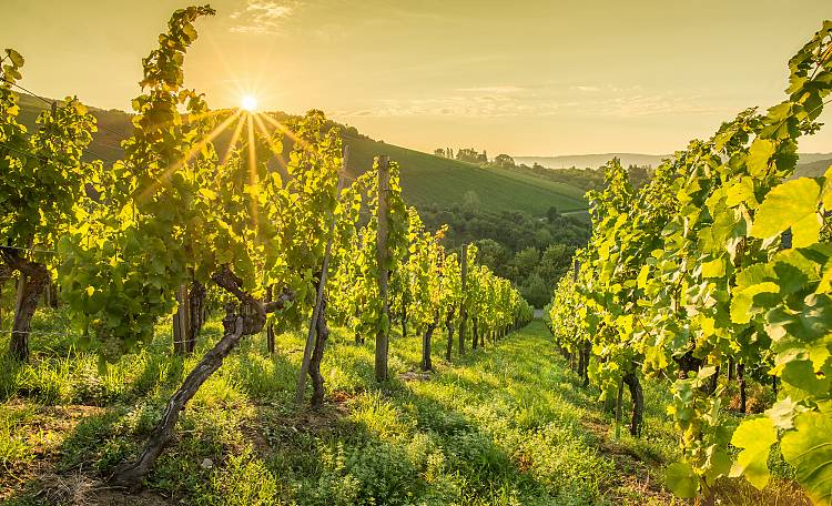 Wine routes of Lake Garda ☀️ - Guide to the main wine routes of Lake Garda
