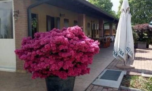 Agriturismo Pozzo Fiorito - Castiglione Delle Stiviere (Mantova)
